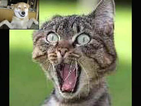 fotos chistosas de animales. y Pequeños Animales